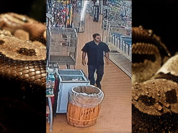 Background [Mike Aixklusiv/Pixabay]; suspected python thief [WJBK/screenshot]